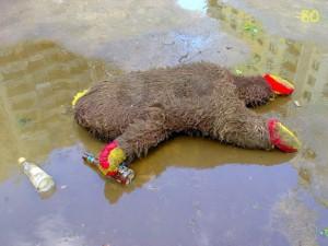 drunk-teddy-bear